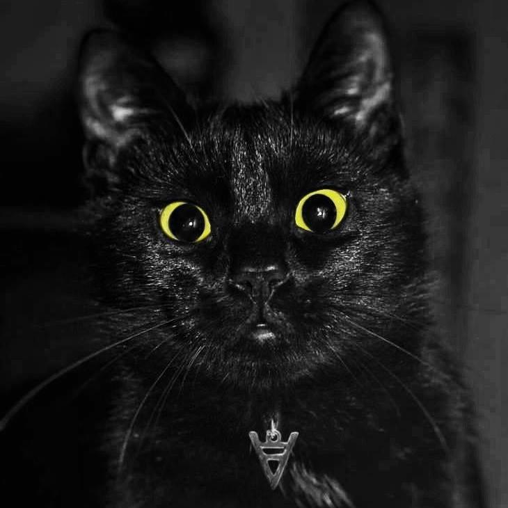 kot bazyl