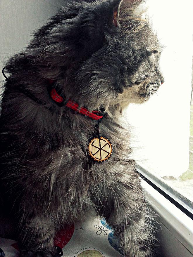 kot sylwia łądka