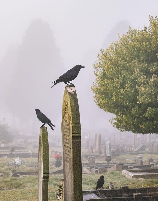 kruki cmentarz